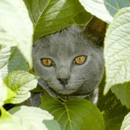 кошка, листья, прятки