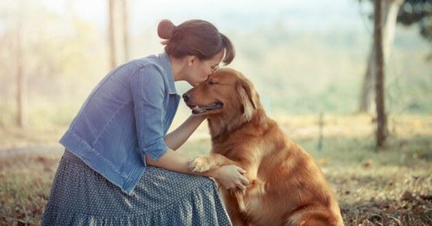 девушка, собака, золотистый ретривер