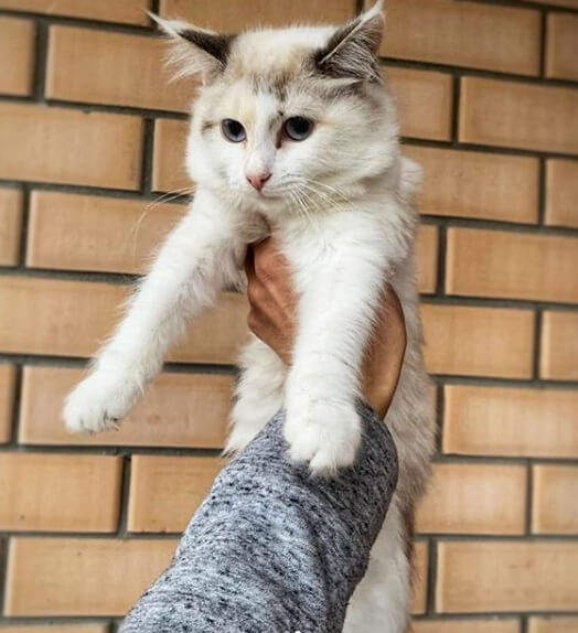 кошка, рука, стена, дом