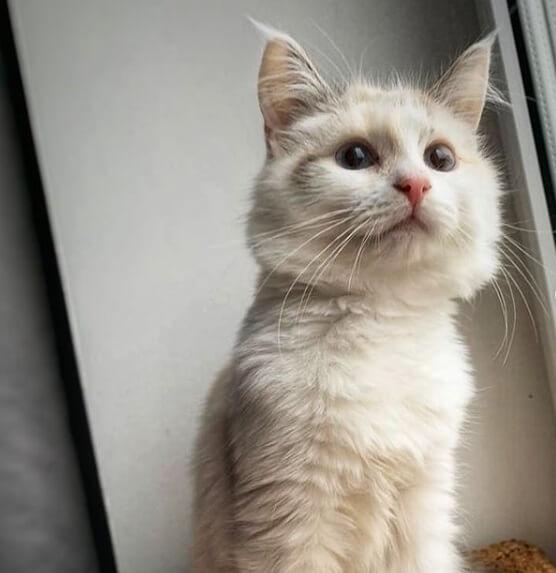 кошка, домашнее животное, стена, окно