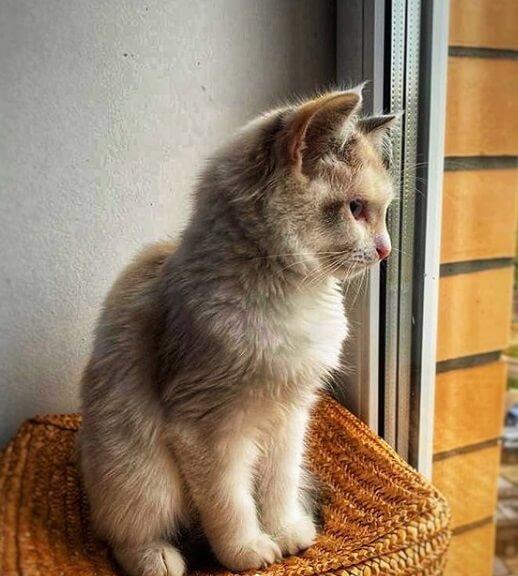 кошка смотрит в окно, корзина, дом
