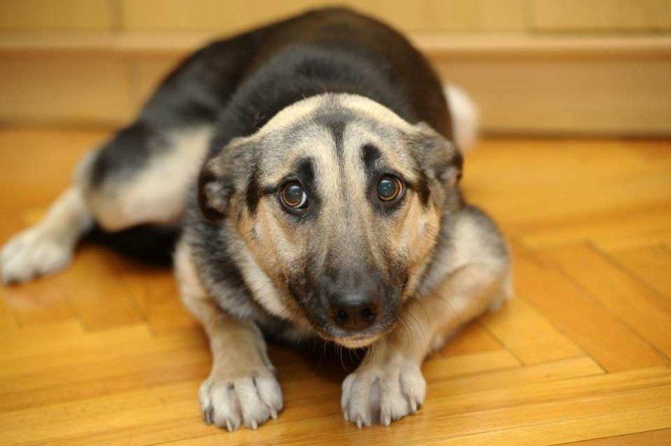 Робкая собака фото