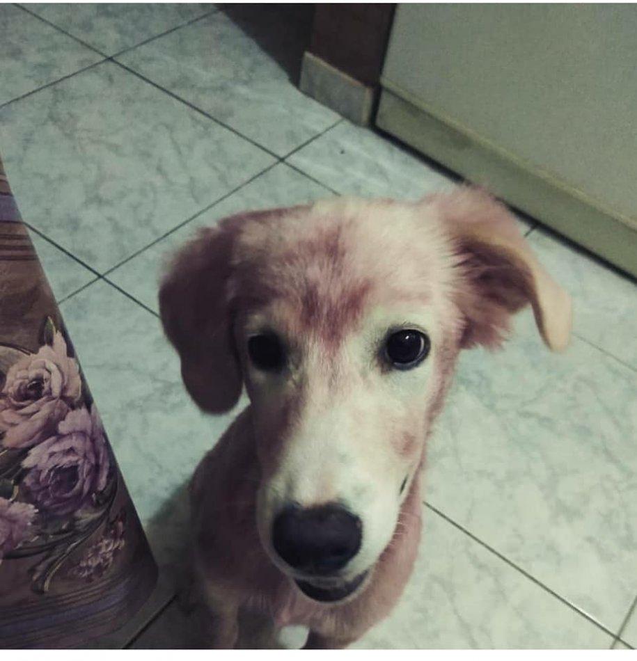 собака, домашний питомец, животное