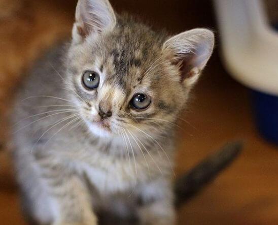котенок, принцесса Фиона, грустный взгляд