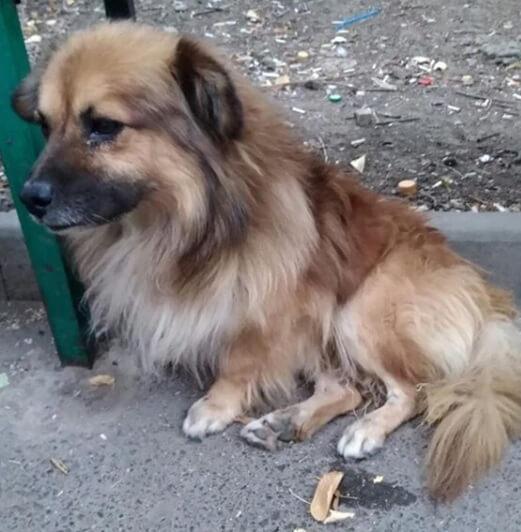 собака, дворняга, улица, скамейка