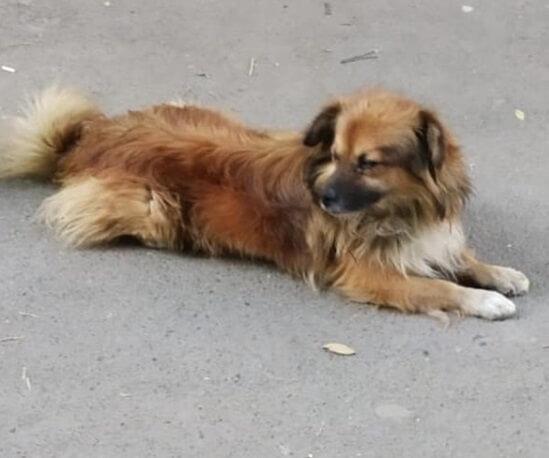 собака на улице, дорога, бездомный пес