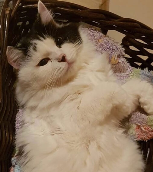кошка, корзина, домашний питомец
