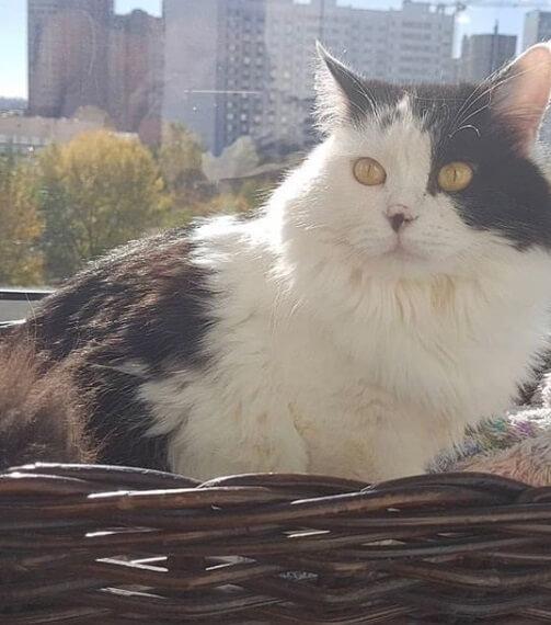 кошка, город, окно, корзина