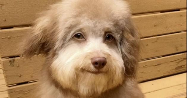собака, взгляд, глаза собаки, животное