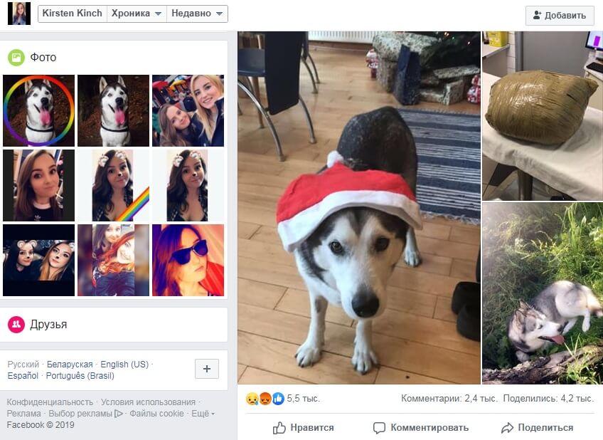 страницы фейсбук, хаски, фото, социальная сеть