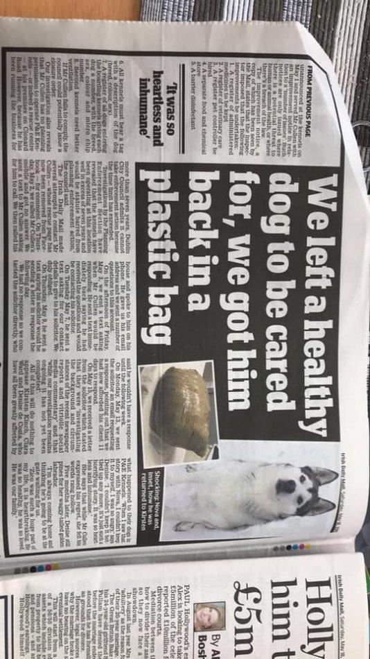 газета, статья, собака, хаски
