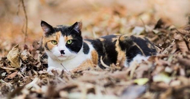 разноцветная кошка, осень, листья