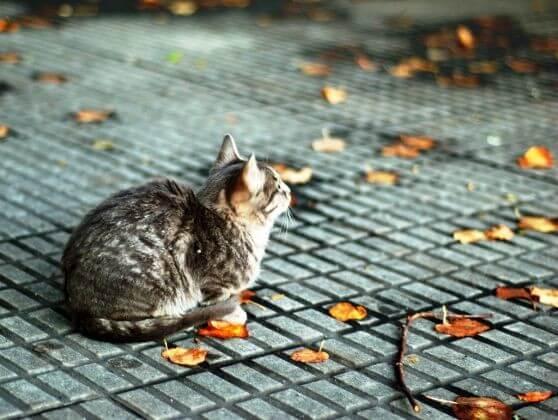 серая кошка, улица, город, осень, листья, дорога
