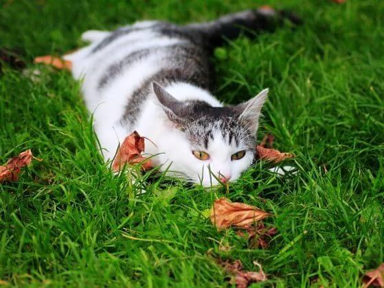 полосатая кошка, сухие листья, трава, осень