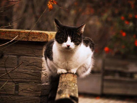 кошка, улица, дом, осень, красные и желтые листья