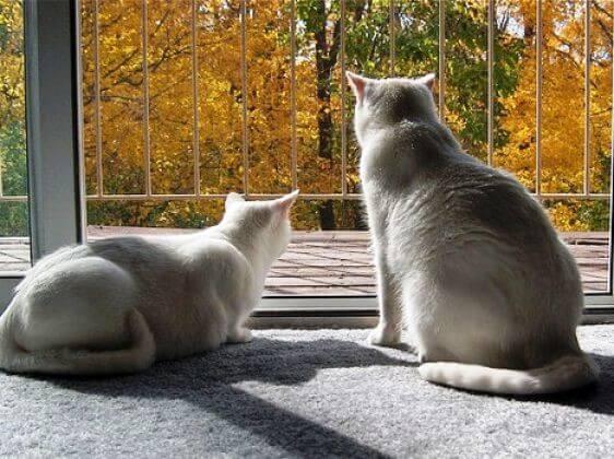 окно, кошки, вид осени, желтые листья