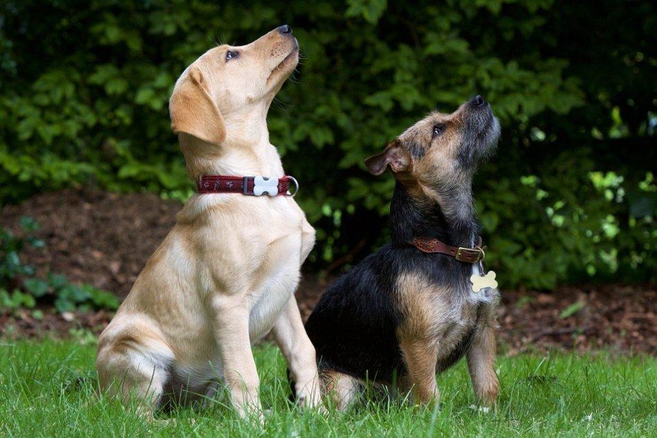 собаки сидят на выдержке фото