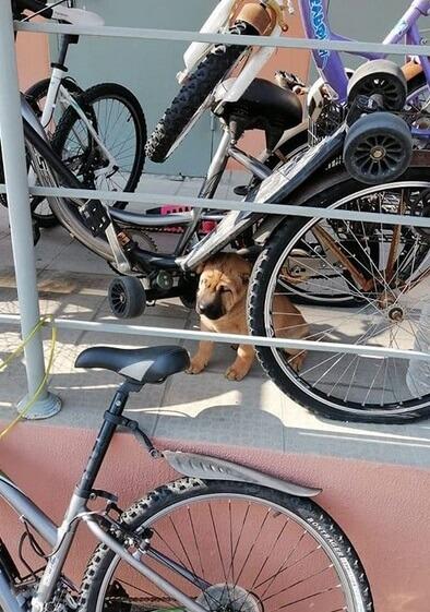 велосипеды, парковка, щенок, порода шарпей