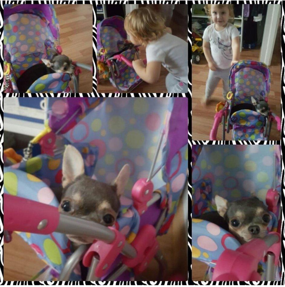 собака, игрушка, коляска, ребенок