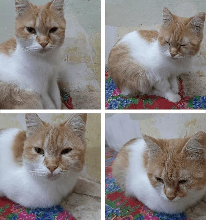 кошка, диван, ковер, питомец