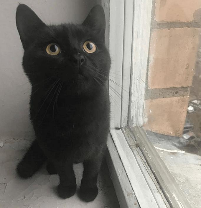 кот, окно, подоконник, питомец