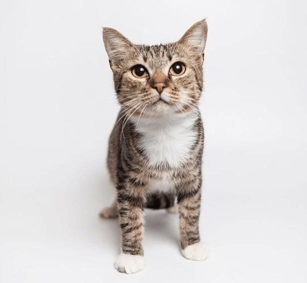 кот, питомец, фотосессия