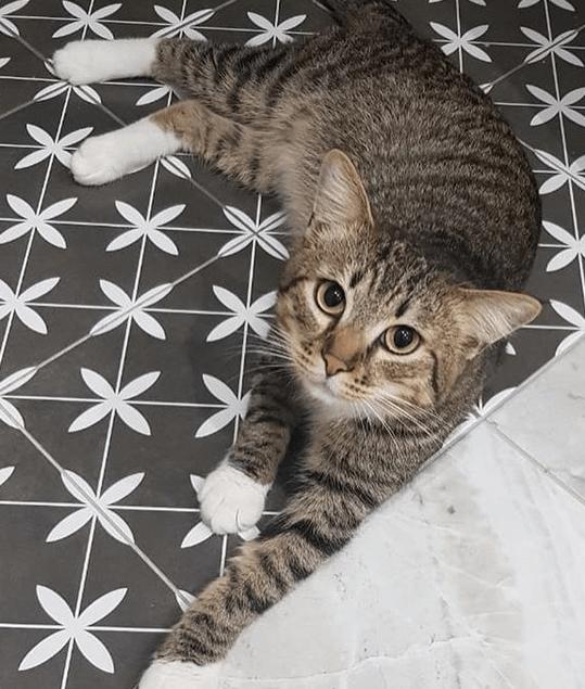 кот, питомец, пол