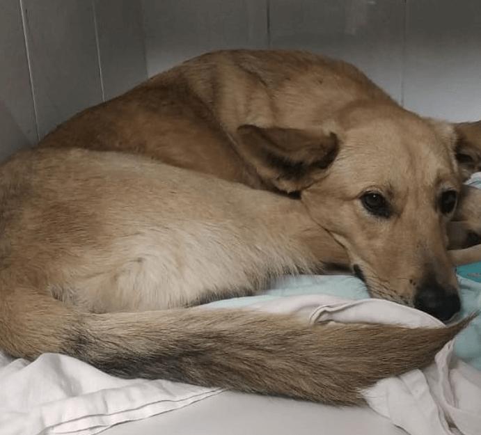 собака, пес, клиника, полотенце