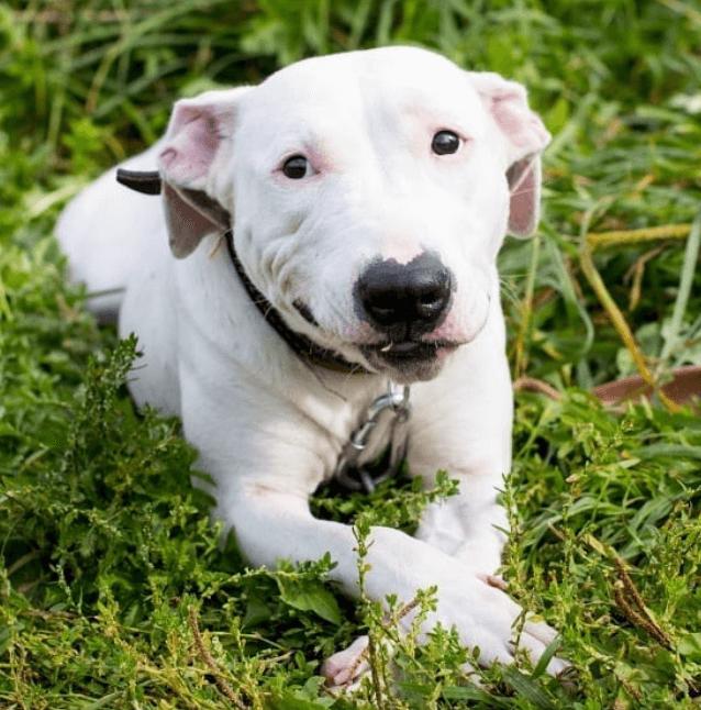 трава, природа, собака, пес