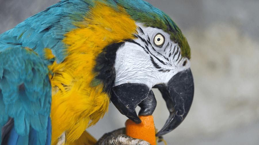 Чем можно кормить попугаев неразлучников