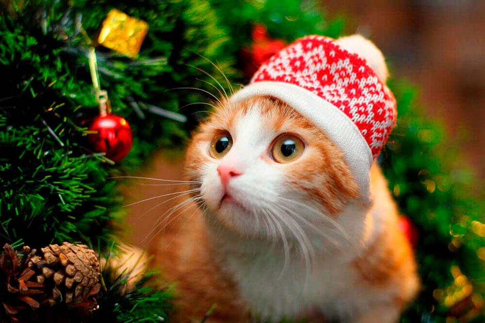 Новый год картинка с котом
