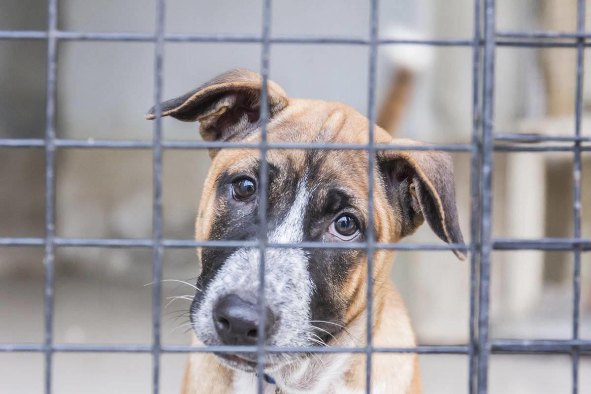 мир картинки с приюта для собак вместо