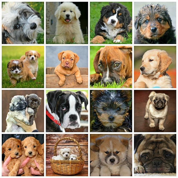 Все картинки пород собак и их название с фотографиями