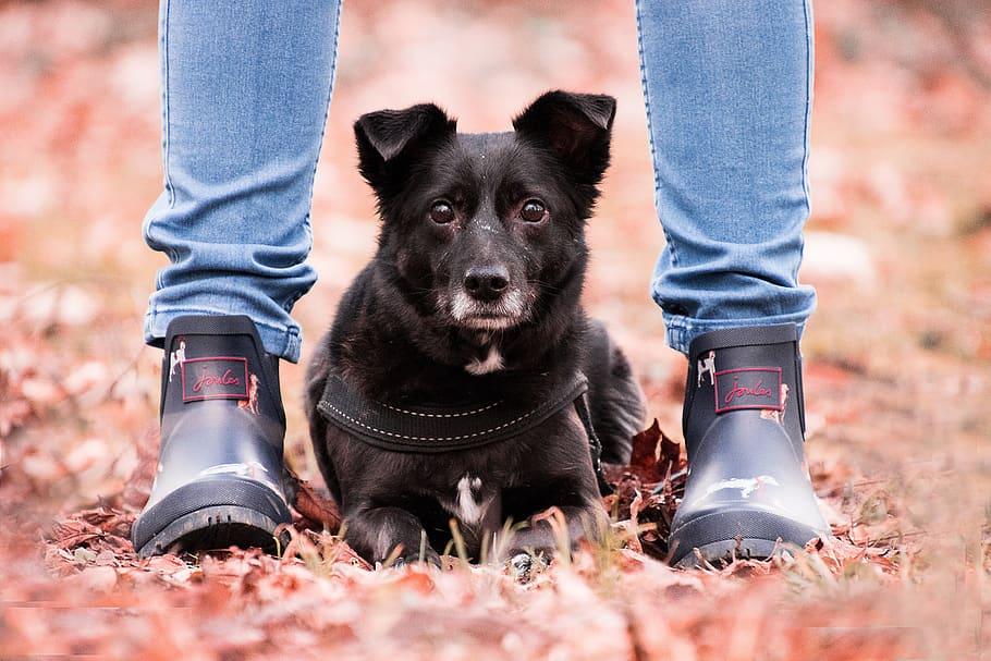 Собака лежит у ног человека фото