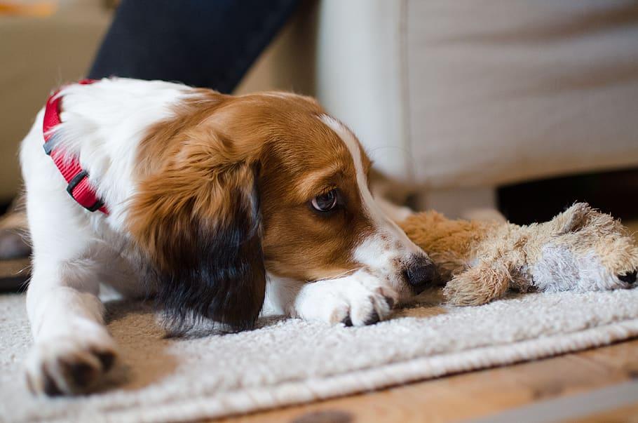 Щенок испугался собака период страхов фото