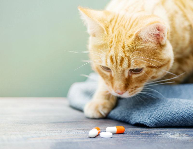 Кошка рыжая смотрит на таблетки фото