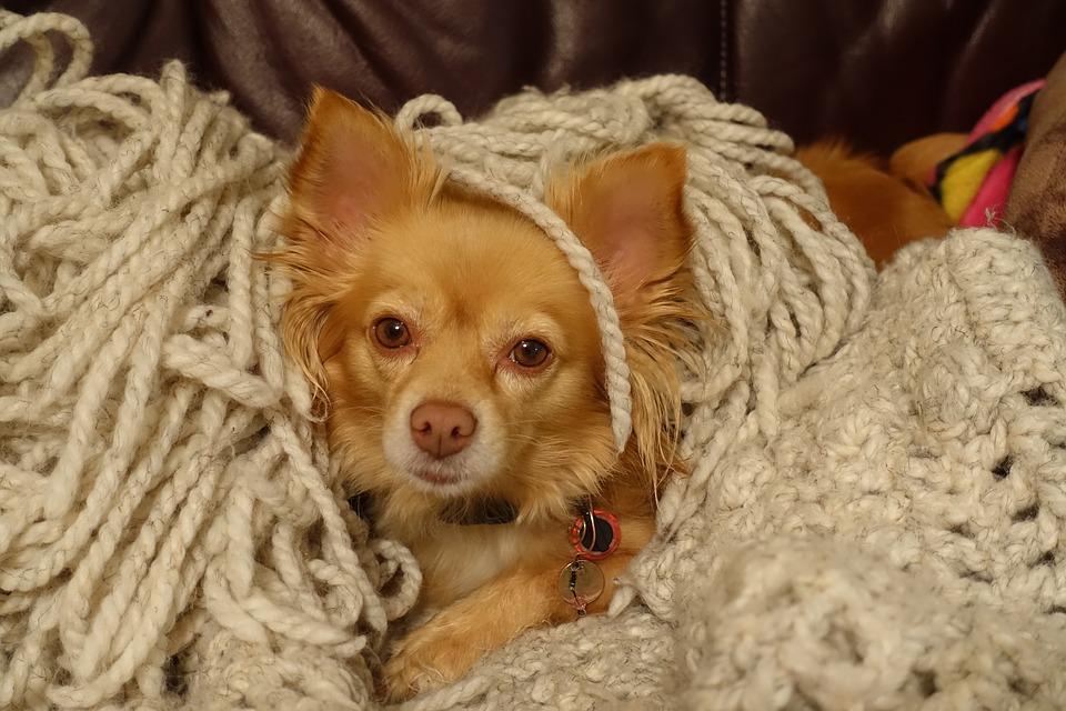 Маленькая рыжая собака прячется фото