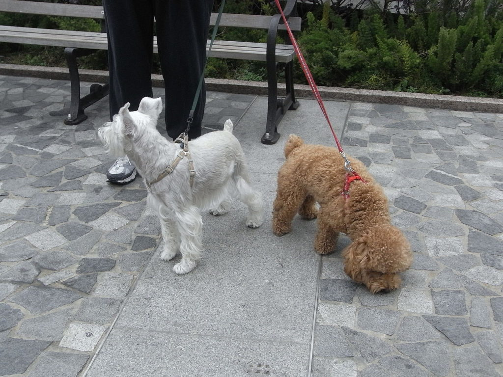 Человек выгуливает двух собак на поводках фото
