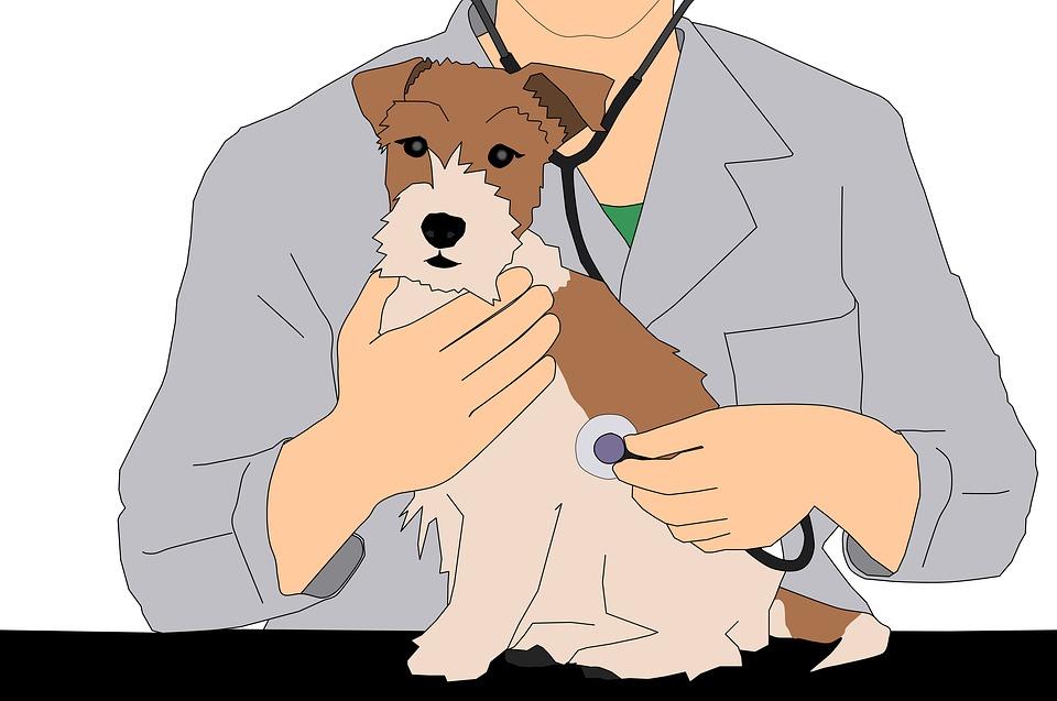 Фокстерьер щенок у ветеринара рисунок фото
