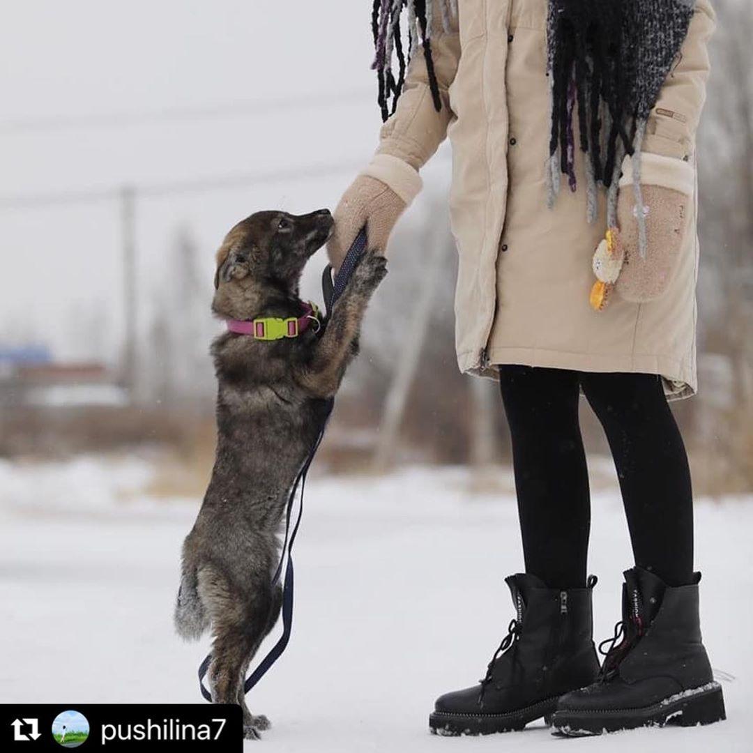 Работа с собакой и девушкой девушки модели в грязовец