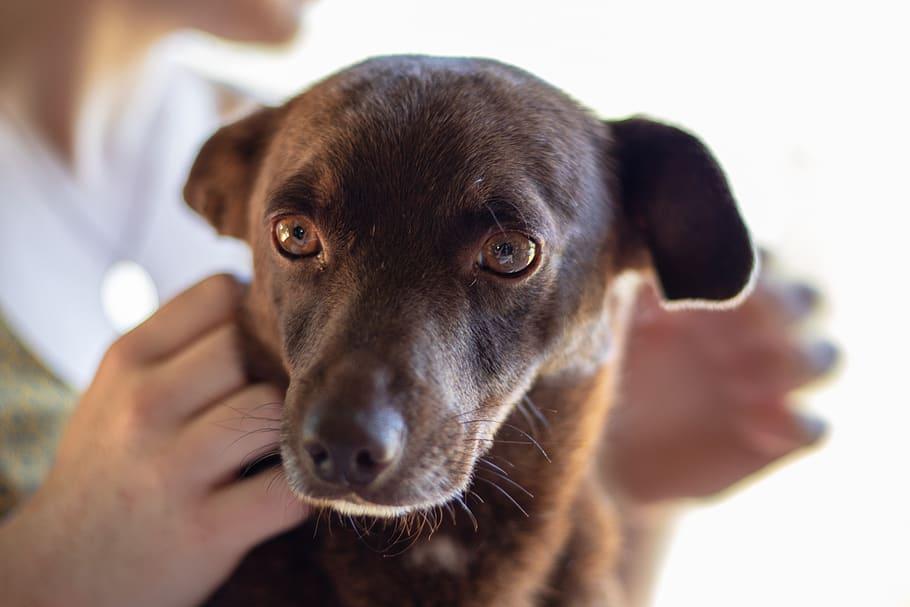 Коричневая собака портрет крупным планом фото