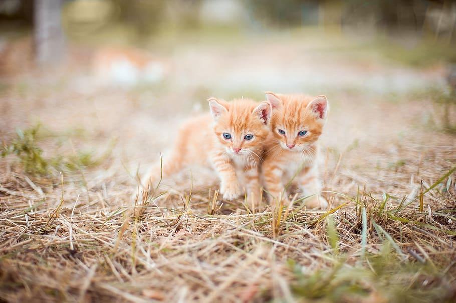 Два маленьких рыжих котенка фото