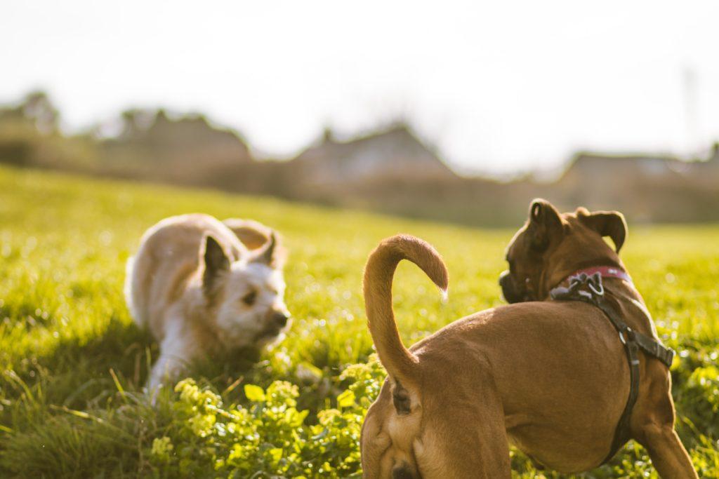 Две собаки играют фото
