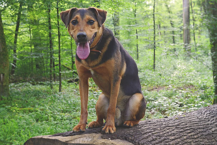 Собака дворняга сидит на поваленном дереве фото