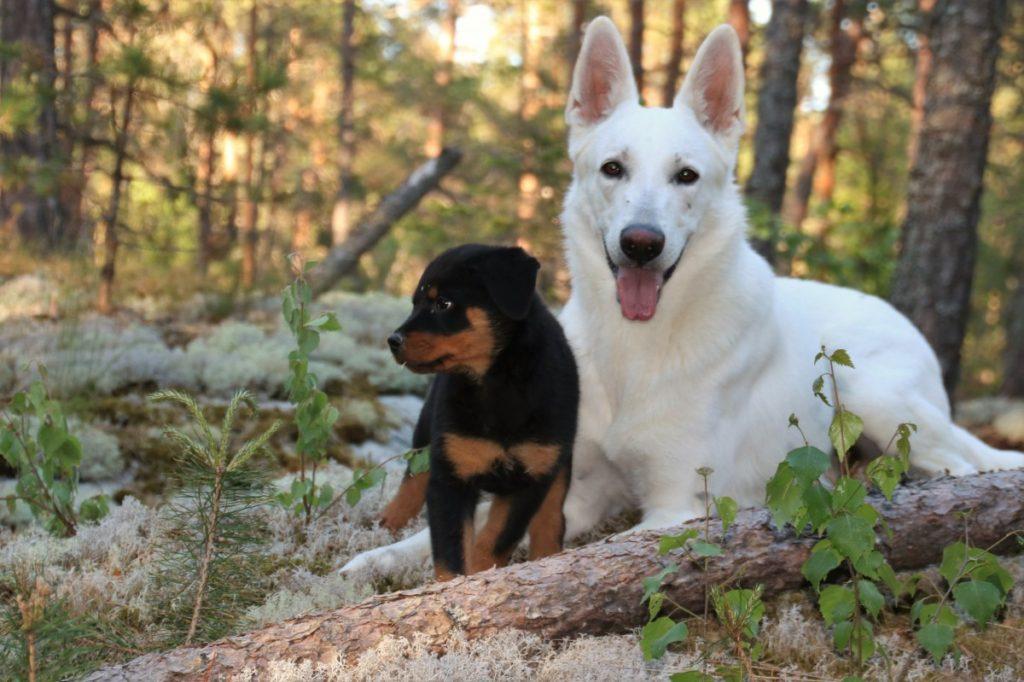 Щенок и взрослая собака фото