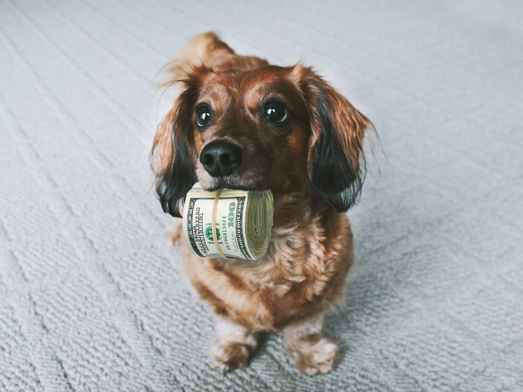 Такса с пачкой денег во рту фото