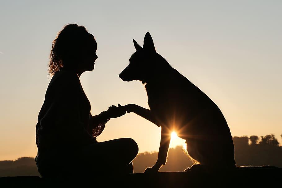 Человек и собака на закате фото
