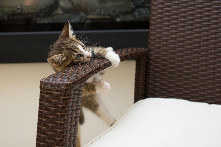 Котенок висит на подлокотнике кресла фото