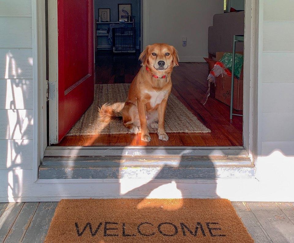 Рыжая собака смотрит в открытую дверь фото