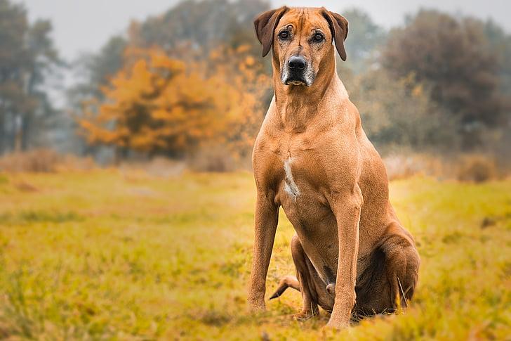 Рыжая собака сидит фото